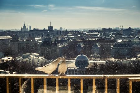 making love: Dos palomas que hacen el amor por encima de la ciudad de Mosc�. Rusia.