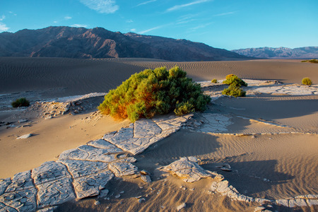 np: Mesquite flat sand dunes at sunrise. Death Valley NP, California. Stock Photo