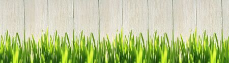Green grass near a wooden fence