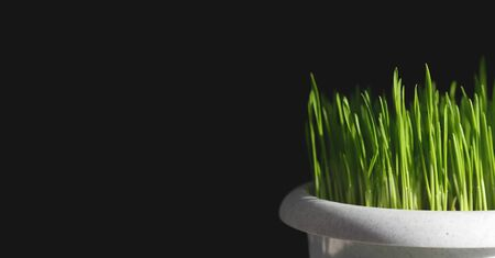 Natural background, green grass isolated on black background for text Фото со стока