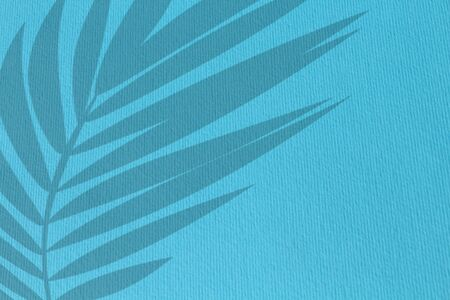 Palm leaves shadow isolated on blue wall