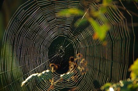 web: natural Wide web