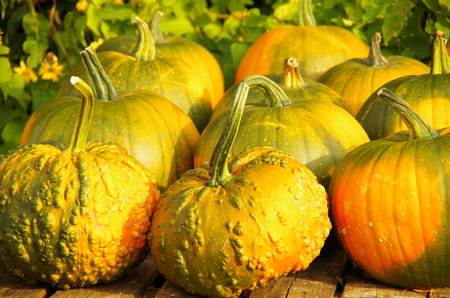 pimples: pumpkin round with pimples
