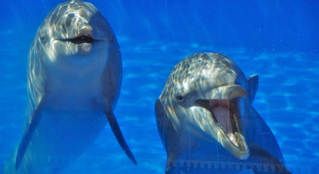 two dolphins in a glass closeup
