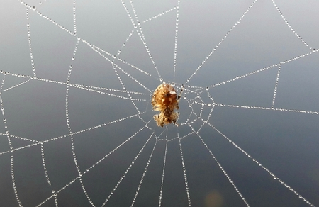 spider in a web of steam in the fog