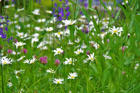 Wild flowers on the clearing