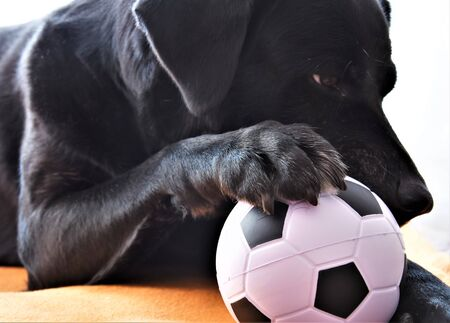Black dog reads and puts his paw on the ball
