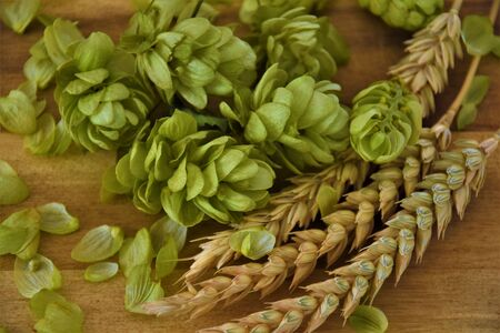 Ears of wheat and hop on a wooden background