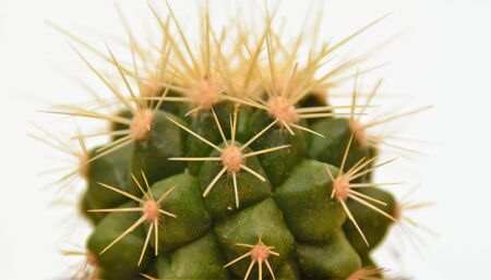 Cactus with thorns on a white background