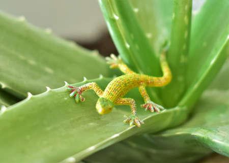 green plastic lizard on aloe branches