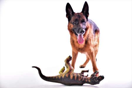 shepherd dog with toy dinosaur on white background