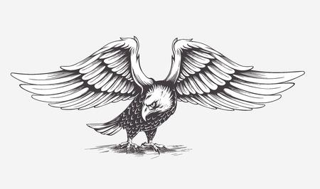 aigle: Main détaillé établi aigle sur un fond blanc. Isolé