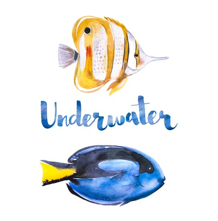Watercolor set of sea blue and yellow fifhes. BlueTang and ButterflyFush drawn by hand on a white background