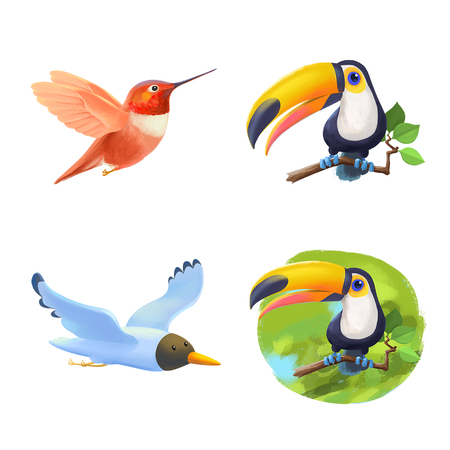 exotic birds: Set of colorful exotic birds in cartoon style. Toucan, colibri, gull. Isolated