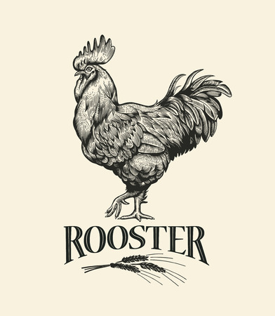 Rooster Vintage engraving style 일러스트