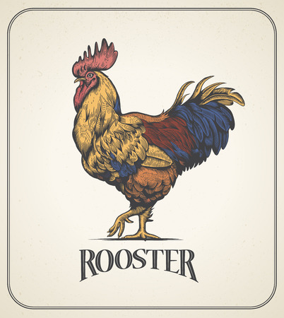 Rooster. Illustration of the cockerel in Vintage engraving style. Rooster colorful grunge label. Sticker image for the farms and manufacturing depicting roster. Grunge label for chicken product. Illustration