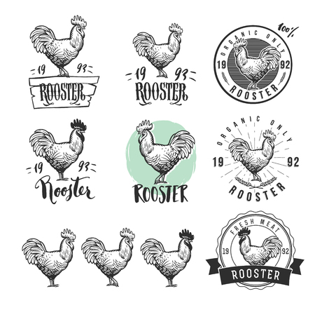 logotypes: Rooster. Cock. Chicken product logotypes set. Hen meat and eggs vintage produce elements. Badges and design elements for the chicken manufacturing. Illustration