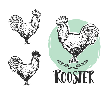 Rooster logotypes set. Hen meat and eggs vintage produce elements. Badges and design elements depicting Cock. Illustration 矢量图像
