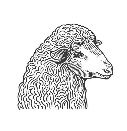 Head of sheep hand drawn in style of medieval engraving. Domestic farm animal isolated on white background. Vector illustration in monochrome colors for restaurant menu, butcher shop, website, logo.