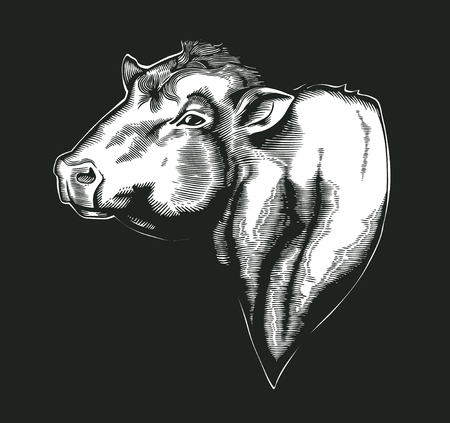 Head of bull of dangus breed drawn in vintage woodcut style. Farm animal isolated on white background. Vector illustration for agricultural market identity, products logo, advertisement.