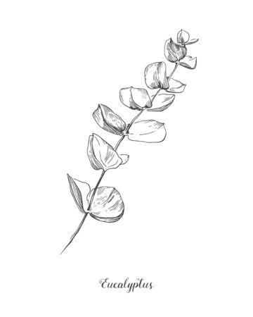 Branche d'eucalyptus. Illustration d'art de ligne botanique dessiné à la main. ensemble de dessin. Collection de branches de croquis avec feuillage, feuilles, plantes, herbes pour la décoration de cartes de mariage, affiche, impression Vecteurs