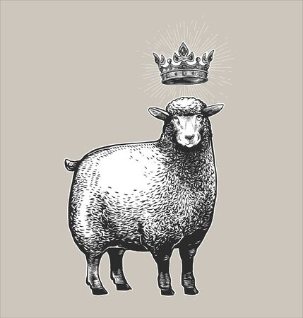 Vector Stylized Illustration of the Sheep with the crown over her head and surprised fasial expression. Vector illustration of the Queen Sheep in graphic style on the white background.