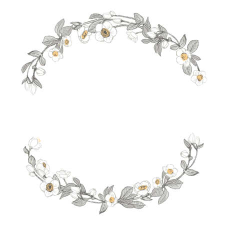 White Flowers and keaves wreath. Round frame with wild flowers, plants. Hand drawn illustration.