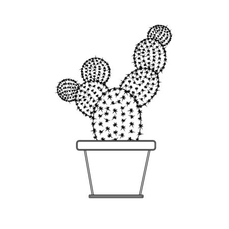 Black and white big cactus in a flower pot.