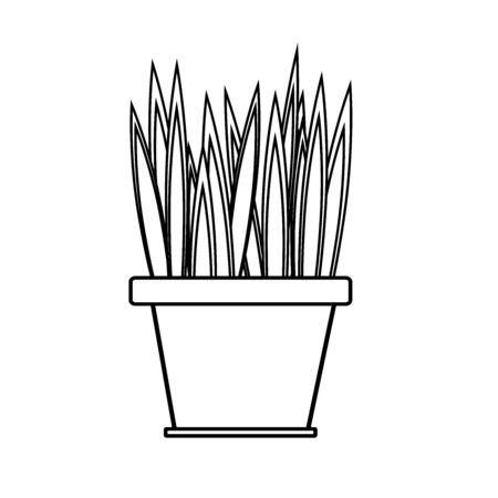 Black and white house plant with sharp leaves in a flower pot.