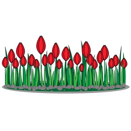 Glade of red tulips on a white background