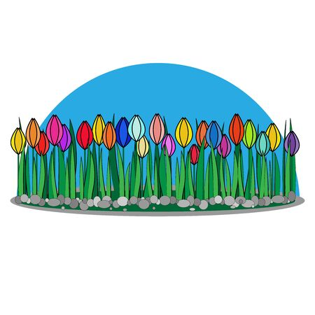 Glade of tulips of different colors on a white background