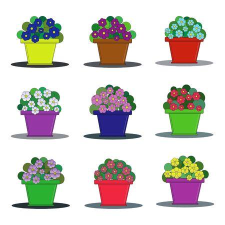 Set of nine varieties of violets in flower pots Illustration