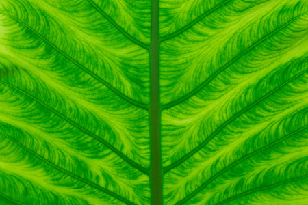 spring background: green leaf texture