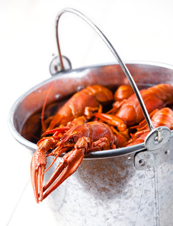 fluvial: Boiled lobsters in bucket on white background
