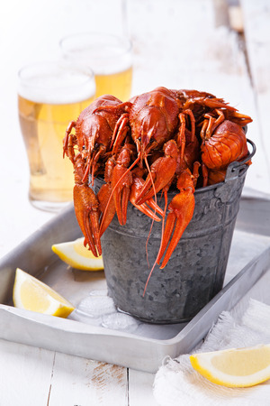 fluvial: Red lobsters with beer on white background
