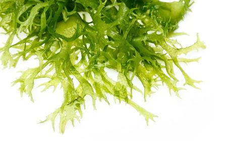 Edible seaweed salad on white background