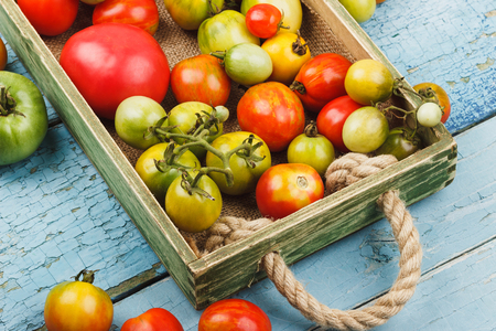 Set of ripe tomatoes in the wooden tray, light blue wooden background