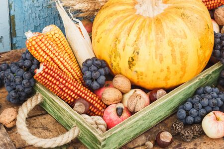 Thanksgiving day: Tray with pumpkin and different ripe vegetables inside Stok Fotoğraf