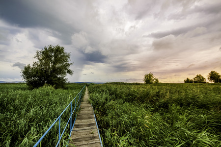 a pier going through in reeds under beautiful clouds photo