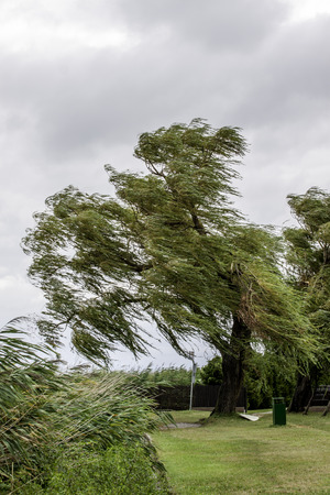 gusty: view of a tree on a windy day Stock Photo