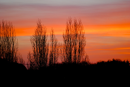 spectra: Red sunset in Rennes with trees silhouette Stock Photo