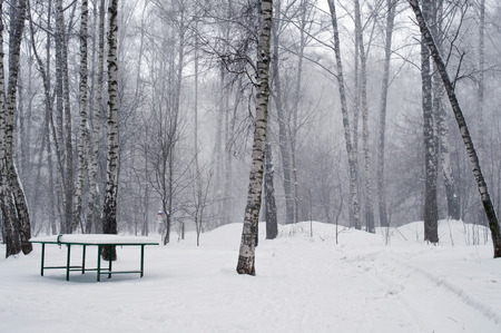 a lot: Table for tennis in forest with a lot of snow
