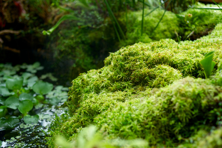 nenuphar: Small pond with moss and plants designed