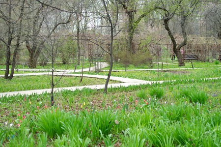 flowerbed: Park in early spring with green flowerbed