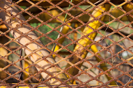trespass: Rusty old fences of barb wire that got tangled together.