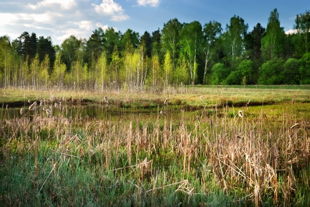 Landscape with swamp and forest photo