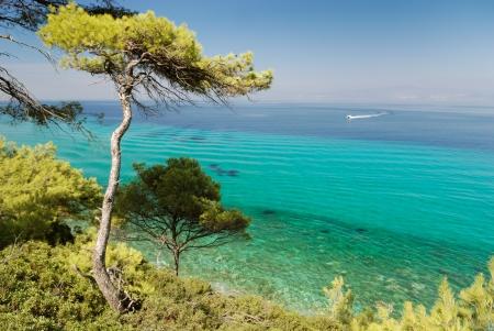 mediterranean forest: pine forest over sea in greece