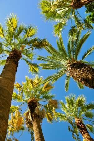 stipe: Tropical palms - view to the up