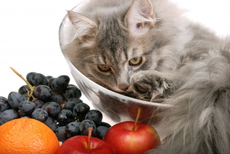 cat in glass bowl with fruit photo