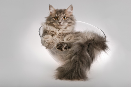 cat in the glass bowl photo